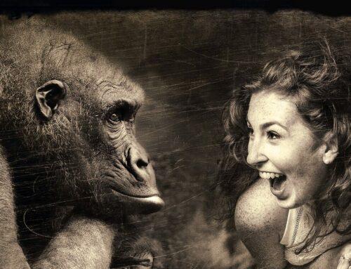 Mich laust der Affe Teil 2